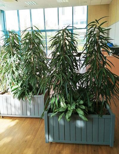 Bacs de plantes pour décoration bureaux