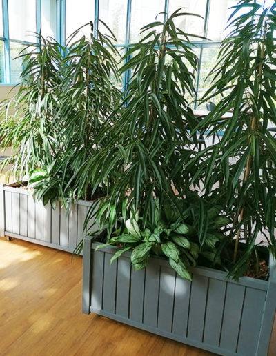 Décoration végétale lieu de travail