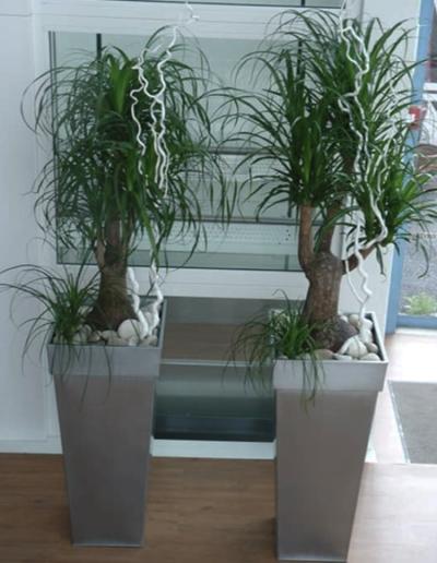 Petits bacs de plantes pour décorer bureaux