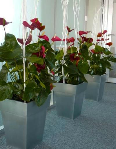 Bacs de fleurs